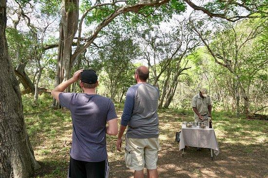 Phinda Private Game Reserve Resmi