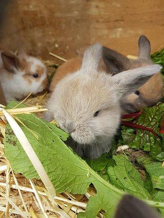 Baby Bunnies enjoying lunch