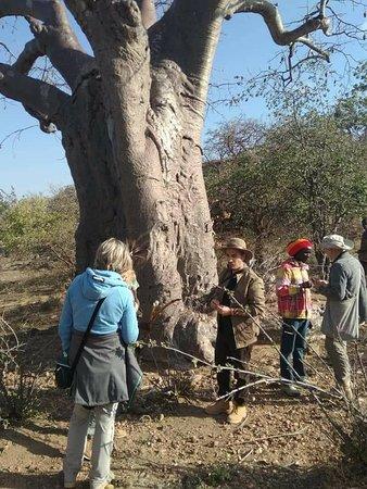 Walking tour in the park,Tarangire national park