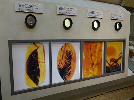 Kujikohaku Museum