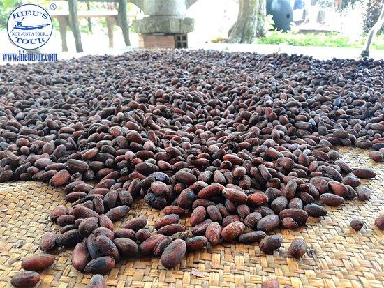 Hieu's Tour - Day Tours: Mekong cacao bean  Hieutour's day - www.hieutour.com +84939666156 contact@hieutour.