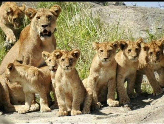 African Victory Safaris