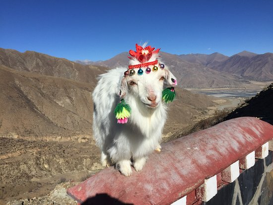 Tibet, China: Cutie..able to take picture with it