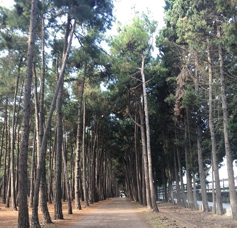Florya Ataturk Ormanı