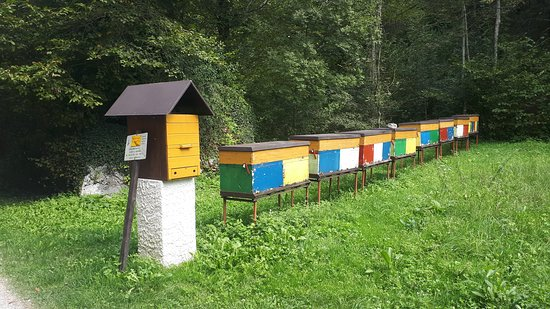beehives in a meadow