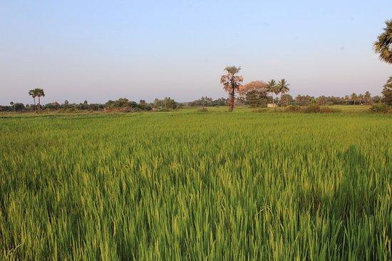 "Melmaruvathur, India: One day trip at ""Gramathil Oru Naal"""