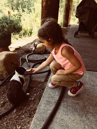 Bunny feeding