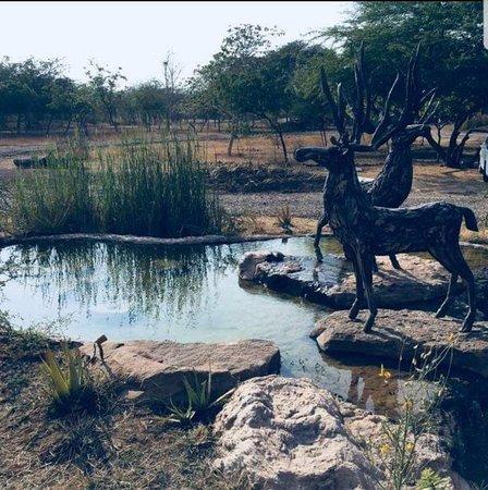 Velavadar صورة فوتوغرافية