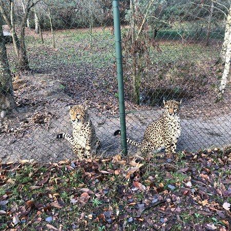 Beekse Bergen Safari Park Foto
