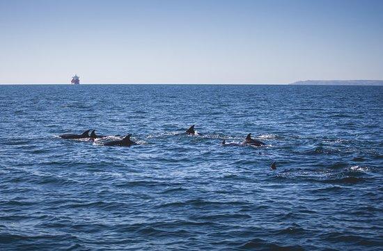 AK Wildlife Cruises: Bottlenose Dolphins  - A K Wildlife Cruises