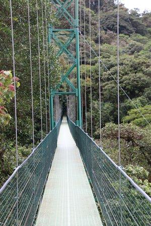Hanging Bridges -Butterflies & Hummingbirds From Monteverde: From half way across