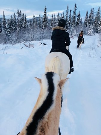Skammestein, Norge: On a horse ride tour in the forest.