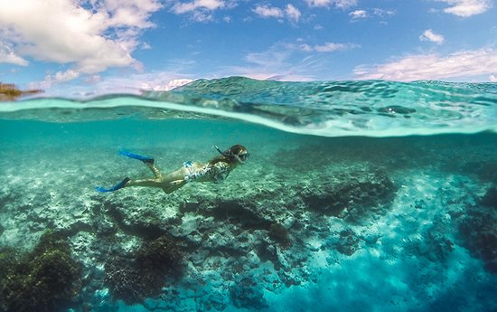 Heron Island Resort: We snorkelled with turtles, rays, sharks and loads of beautiful fish.