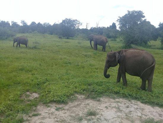 Uplanka Tours: Elephant jeep Safari Day Tour