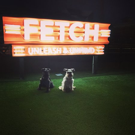 Fetch Park and Ice House
