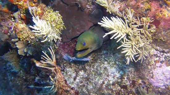 XTC Dive Center: Chinchorro Moray