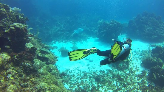 XTC Dive Center: La Moneda Stingray with Meyra
