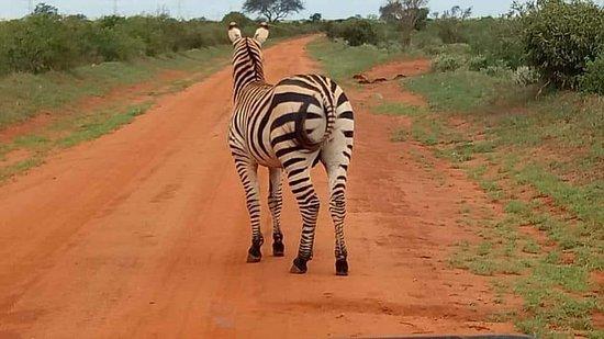 Ảnh về Amboseli National Park