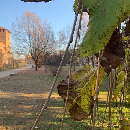 Musei Civici di Pavia Castello Visconteo