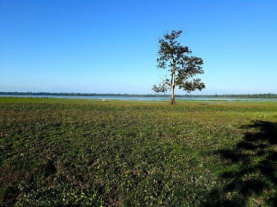Национальный парк Казиранга, Индия: The wild side