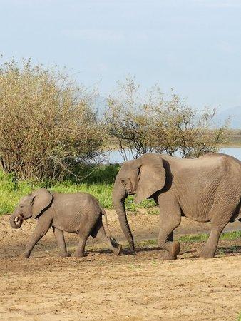 Foto de Selous Game Reserve