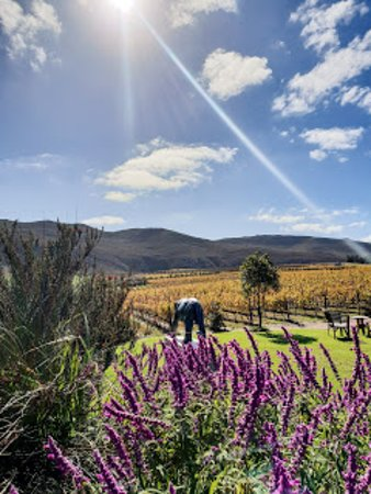 Creation Wines: View from Tasting Room & Gardens