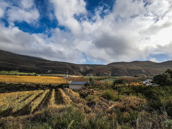 Creation Wines: Vineyards
