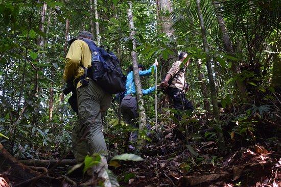 Sumatra Jungle Trekking in Bukit Lawang