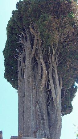 Mt. Athos Peninsula صورة فوتوغرافية