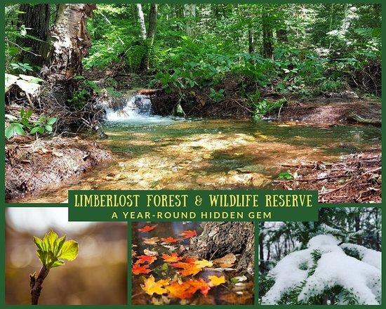 Limberlost Forest & Wildlife Reserve