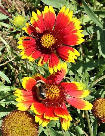 Ботанический сад екатеринбург купить цветы, пожелание красивый как букет цветов на день рождения