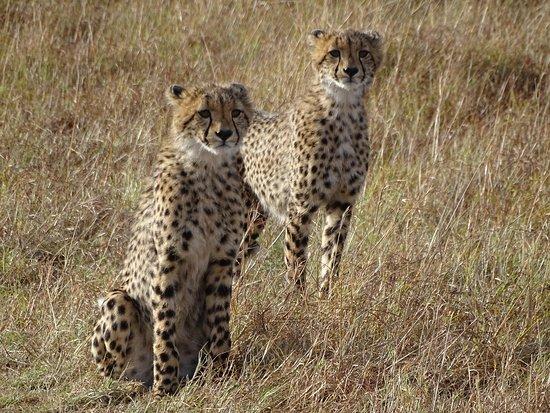 Cheetah Mara Reserve