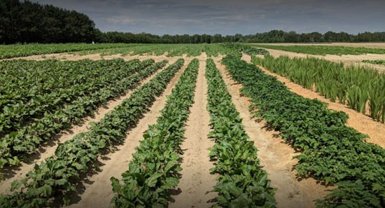 Sudbury, Kanada: Fields at Josephines Vegetables no Herbicide