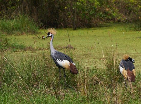 National Vogel