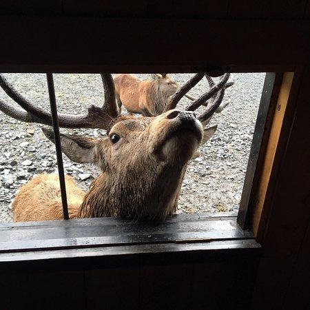 The Galloway Forest Park Red Deer Range Castle Douglas Hours Address Reviews 5
