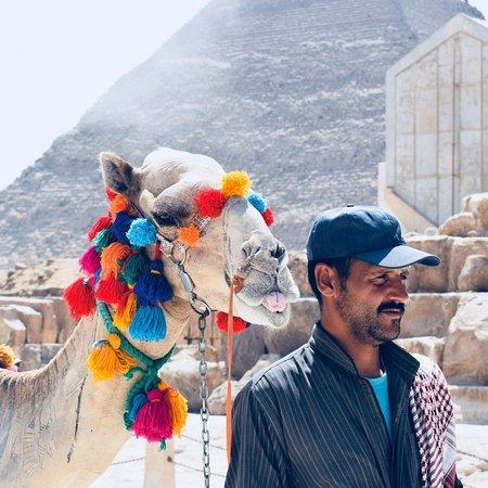 Província de Giza, Egito: Man's best friend: A camel.
