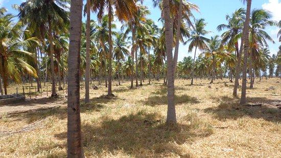Barra de Jequia Beach: Coqueiral