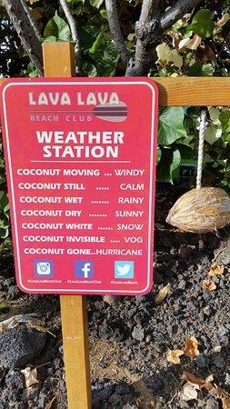 Lava Lava Beach Club: Coconut weather forecast