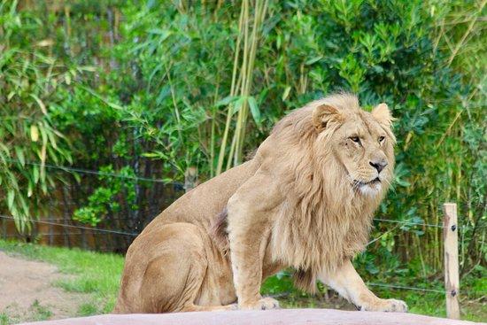 Zoo de La Fleche Foto