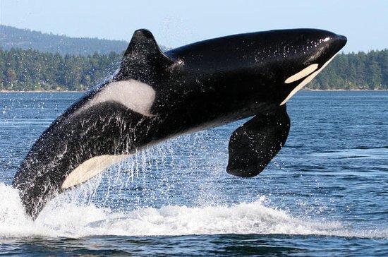 Avistamiento de ballenas desde Friday...