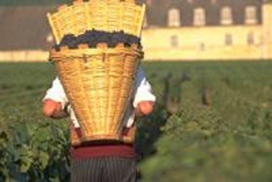 Vinsmaking - Cote de Nuits-regionen...