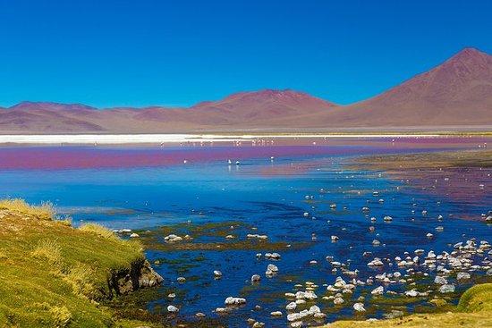 Atacama Salt Flat Lagoons Tour...