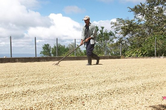 Café Las Flores Coffee Plantation...