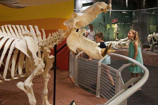 Scheletri: Museo di Osteologia
