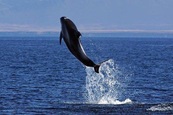 Tour islandese di equitazione e whale