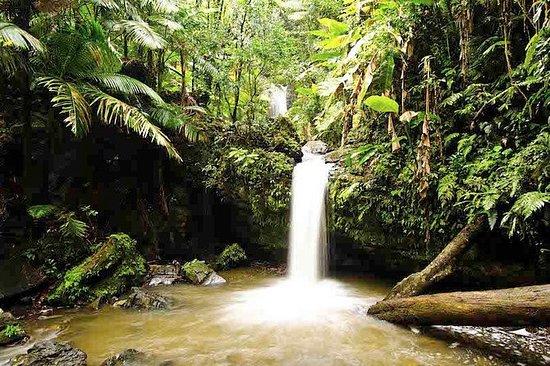 Aventura de senderismo en la selva...