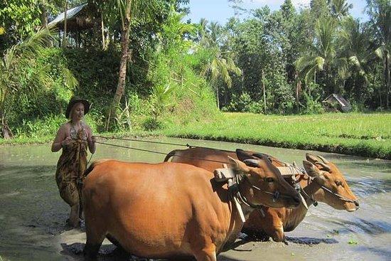 Bali Landschaftstour Inklusive Sangeh...
