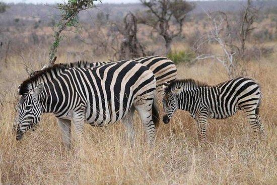Giornata intera del Kruger Park