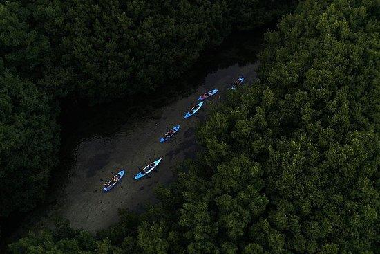 Excursión en kayak a la bahía...