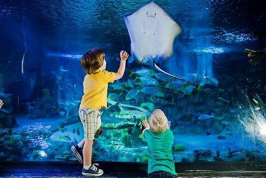 SeaLife London Aquarium con crociera